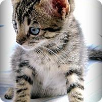 Adopt A Pet :: Serena - Mount Pleasant, SC