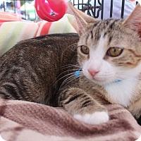 Adopt A Pet :: Kimba - Amityville, NY