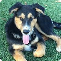 Adopt A Pet :: CHET - San Pedro, CA