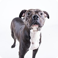 Adopt A Pet :: Kelsey - Decatur, GA