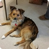 Adopt A Pet :: Mister - Las Vegas, NV