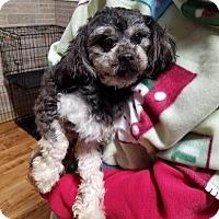 Adopt A Pet :: Rudy - Plainfield, IL