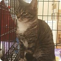 Adopt A Pet :: MaAimee - Griffin, GA