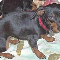 Adopt A Pet :: Kiki - Camden, SC