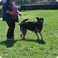 Adopt A Pet :: Daisy - Crystal Lake, IL