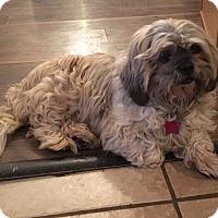 Adopt A Pet :: Jada - Boerne, TX