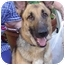Photo 3 - German Shepherd Dog Dog for adoption in Pike Road, Alabama - Millie