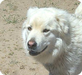 Where Can I Adopt A Dog In Colorado Springs
