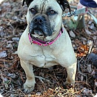 Adopt A Pet :: Carolina - Tinton Falls, NJ