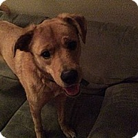 Adopt A Pet :: Izzy - Georgetown, KY
