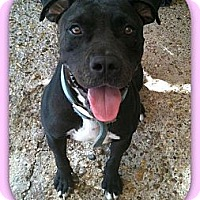 Adopt A Pet :: Madison - Eddy, TX