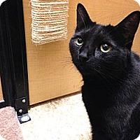 Adopt A Pet :: Mo (aka Mojo) - Foothill Ranch, CA
