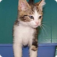 Adopt A Pet :: Davey - Dover, OH