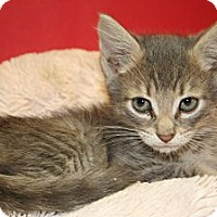 Adopt A Pet :: ENRIQUE - SILVER SPRING, MD