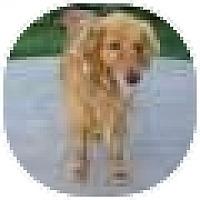 Adopt A Pet :: Alex - Denver, CO