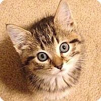 Adopt A Pet :: Mila - St. Louis, MO