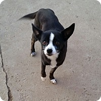 Adopt A Pet :: SUNNY - Gustine, CA