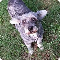 Adopt A Pet :: Mindy - Alpharetta, GA