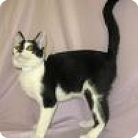 Adopt A Pet :: Lenny - Powell, OH