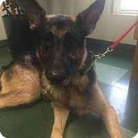 Adopt A Pet :: RAY - Tully, NY