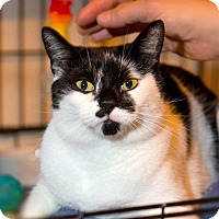 Adopt A Pet :: Marvelous Ms. Marple is Magnificent - Brooklyn, NY