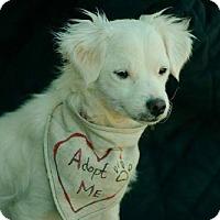 Adopt A Pet :: Annie - Maricopa, AZ
