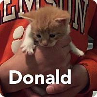 Adopt A Pet :: Donald - Herndon, VA