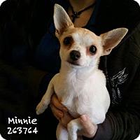 Adopt A Pet :: BUTTERCUP - Conroe, TX