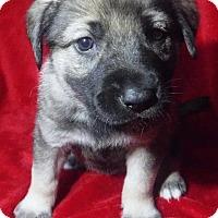 Adopt A Pet :: Griffin - Batesville, AR