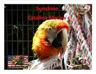 Macaw for adoption in Vancouver, Washington - SunshineSpecialNeeds Catalina