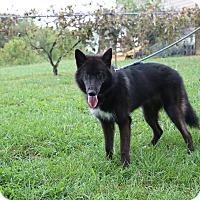 Adopt A Pet :: Morgandy - Portland, ME