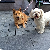 Adopt A Pet :: Little Jenny - Long Beach, NY