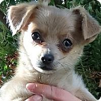 Adopt A Pet :: Minxie - Oakley, CA