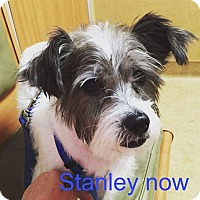 Terrier (Unknown Type, Small) Mix Dog for adoption in Concord, California - Stanley