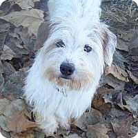 Adopt A Pet :: Jack - Hedgesville, WV