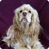 Adopt A Pet :: Williard Montgomery - Urbana, OH