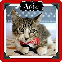 Adopt A Pet :: Adia - Adoption Pending - Arlington, TX