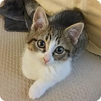 Adopt A Pet :: Fiona - Island Park, NY
