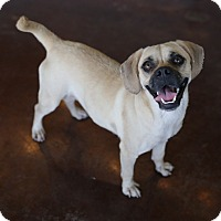 Adopt A Pet :: Alice - San Antonio, TX
