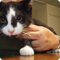 Adopt A Pet :: Trevor - Columbus, OH