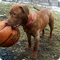 Adopt A Pet :: Winnie - Oakland, MI