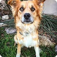 Adopt A Pet :: Nathan - Fredericksburg, TX