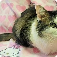 Adopt A Pet :: Jazmine - Colorado Springs, CO