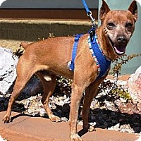 Adopt A Pet :: Axel - Gilbert, AZ