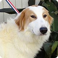 Adopt A Pet :: Calvin & Dexter NEW VIDEO - Westport, CT