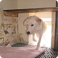 Adopt A Pet :: Shaggy - Wallaceburg, ON