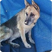 Adopt A Pet :: Jersey - McKinney, TX
