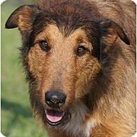 Adopt A Pet :: Whelan - Providence, RI
