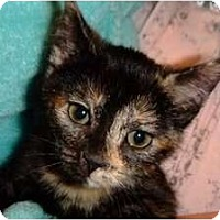Adopt A Pet :: Ava - Riverside, RI