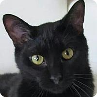 Adopt A Pet :: Nugget - Covington, KY